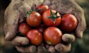 tomatoes-dirty-hands
